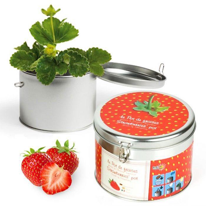 Aardbeienzaadjes in een vrolijk doosje