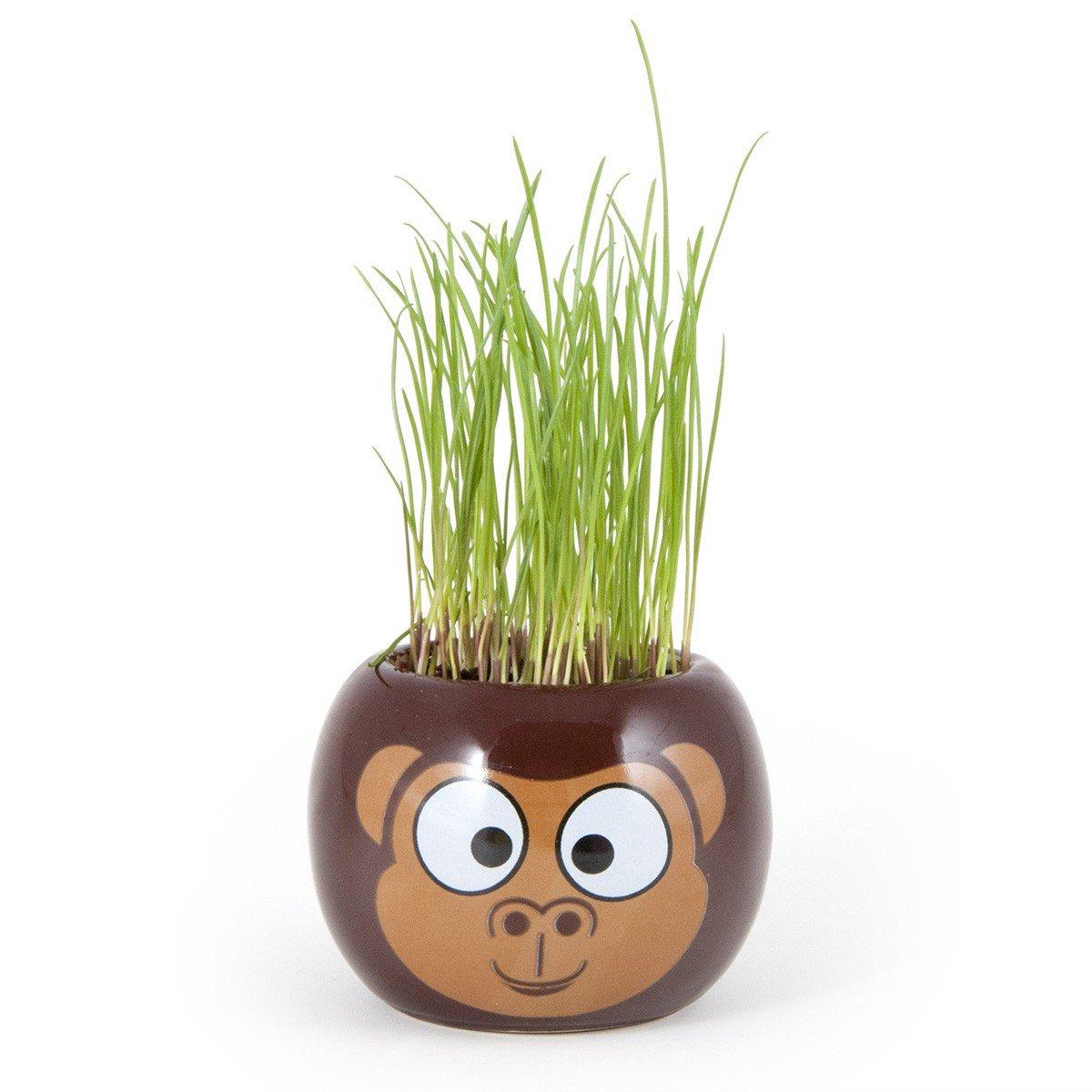 Klein plantje met dierenafbeelding
