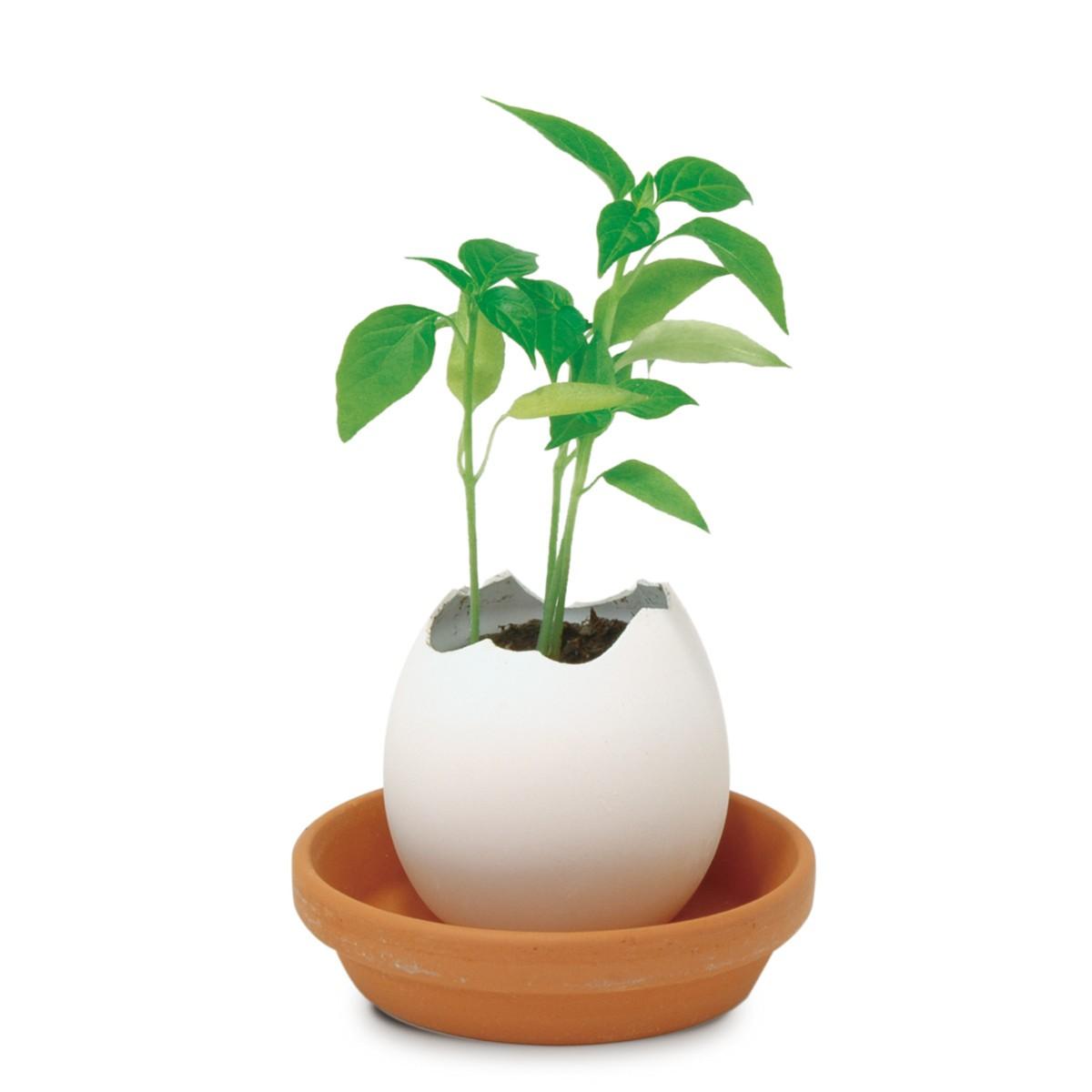 """Plantenset """"Ei"""""""