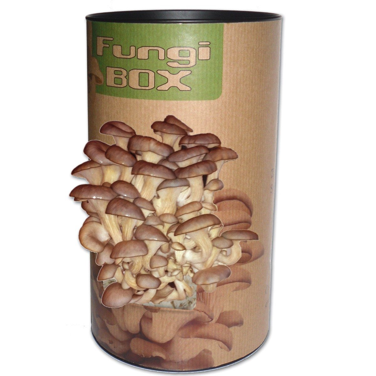 Fungi box – kweek je eigen oesterzwammen!