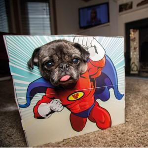 Avonturenbox - photobooth voor huisdieren