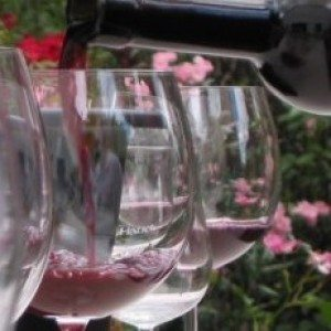 Cursus wijnproeven - IJhorst