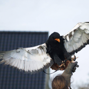 Workshop Roofvogel - Berkel & Rodenrijs