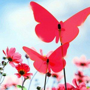 Zonvanger ''vlinder''